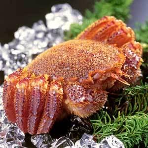 crab_1866_71388991